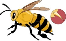 Yellow jacket sting definition - Allergies: Allergy Symptoms